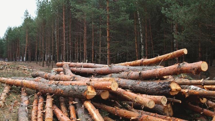 La tala desmedida está afectado el medio ambiente y a las comunidades nativas que habitan ahí (Foto: Getty)