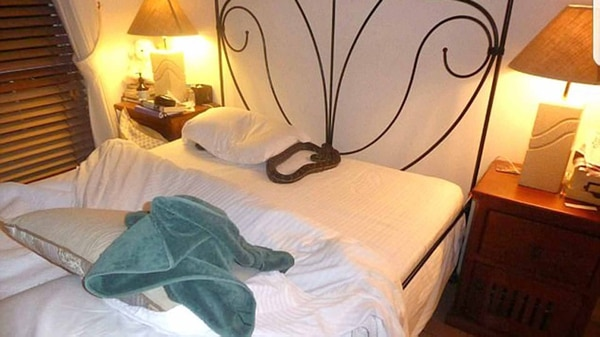 La cama de su habitación