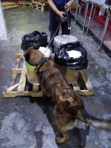 Decomisan fentanilo en el AICM la Guardia Nacional, Semar, Aduanas y un binomio canino (Foto: twitter/@SATmx)