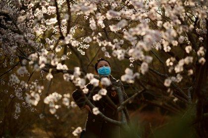 Una mujer con barbijo, en un parque de Beijing. REUTERS/Thomas Peter/File Photo