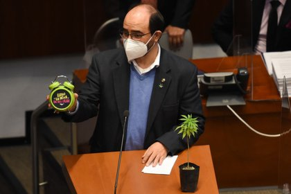 Álvarez Icaza también mostró en la tribuna una planta de marihuana, de las cuales se vieron varias en el Pleno del Senado (Foto: Cuartoscuro)