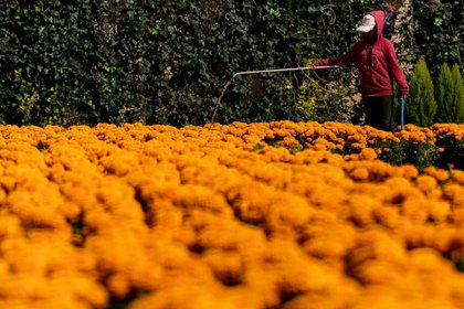 Se prevé que industrias que tengan que ver con el adorno de las ofrendas sí tengan derrama de económica (Foto: GALO CAÑAS/CUARTOSCURO)