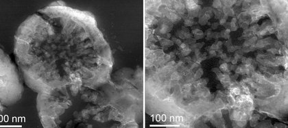 Células de Metallosphaera sedula cultivadas en meteorito marciano. (Milojevic et al., Communications Earth & Environment, 2021)