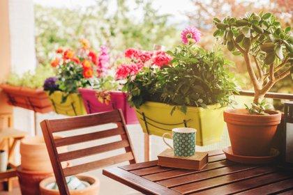 Consejos para elegir las mejores plantas según el tipo de balcón que tengas (Shutterstock)