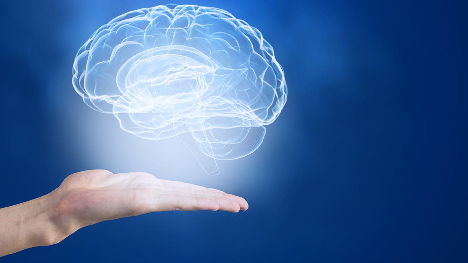 La memoria está asociada distintos patrones de conexión cerebrales (Shutterstock)