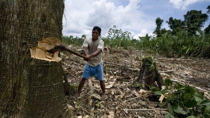 La deforestación, por la transformación de bosques nativos para la producción de cultivos y la ganadería, ha emitido el 10,52 por ciento de los gases de efecto invernadero a nivel nacional. Foto: AFP.