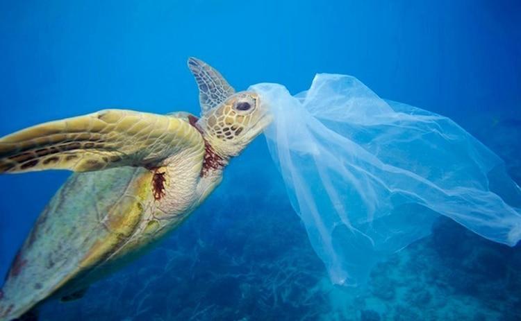 Casi 70 años después de que comenzó la producción de plástico este ha llegado a sitios insospechados (Fot: Twitter).