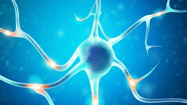 El nuevo hallazo cambia 60 años de concepciones de la neurociencia.