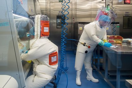 La investigación de patógenos es clave para abordar el misterio de los orígenes del coronavirus (AFP)