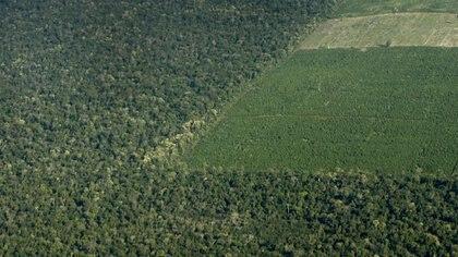 """Ana Di Pangracio, directora de FARN: """"La tasa de deforestación de la Argentina resultó seis veces más alta que el promedio mundial"""". Foto: Fernando Calzada."""