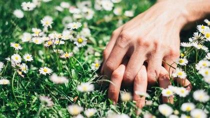 No hay un momento más universalmente reconocido como símbolo de renovación que la llegada de la primavera (Getty Images)