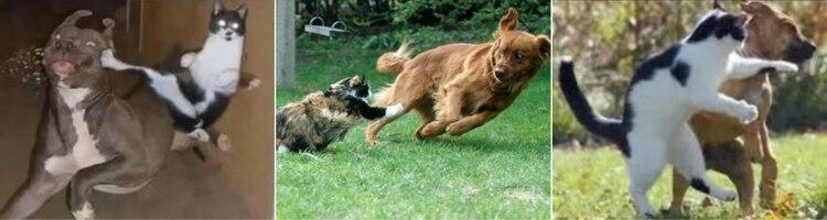 Los dueños de mascotas suelen dividirse en dos grandes grupos, los que prefieren a los gatos y los que optan por los perros debido a la personalidad de cada quien, pero lo seguro es que cada uno nos dará amor incondicional. Hoy celebramos el Día Internacional del gato Fotos: (Facebook)