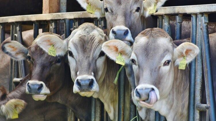 Según Doug Bariner la agricultura está muy impulsada por la tecnología (Foto: Archivo)