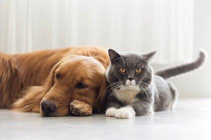 Los perros y gatos son las mascotas con mayor presencia en los hogares de los argentinos