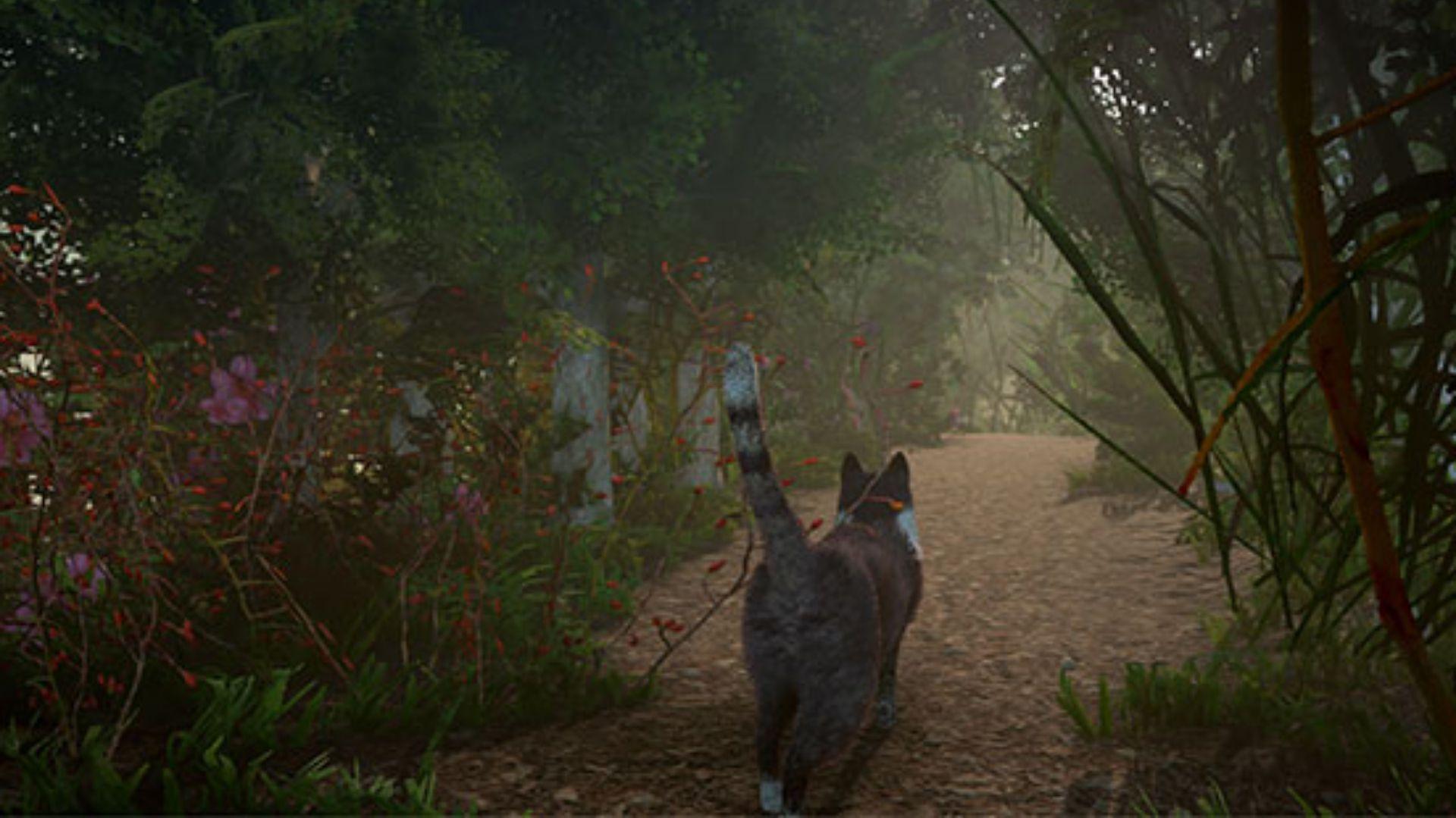 La gata Elizabeth es la protagonista de la historia (Foto: Captura de pantalla de Twitter)