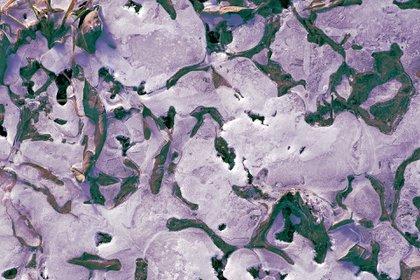 """""""Hay indicios de que los neandertales y los denisovanos habitaron en el norte de Siberia y sufrieron el azote de varias enfermedades víricas; algunas conocidas, como la viruela, y otras que podrían haber desaparecido"""", sostienen investigadores rusos (Pixabay)"""