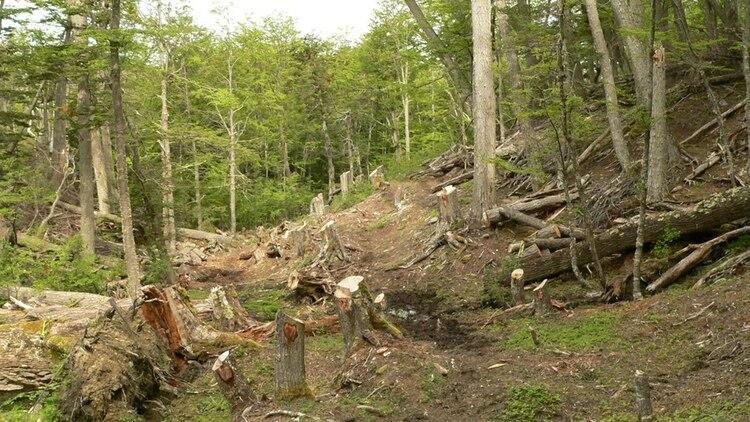 La superficie forestal de Canadá ha disminuido más del 9% desde el 2000 (Foto: Archivo)
