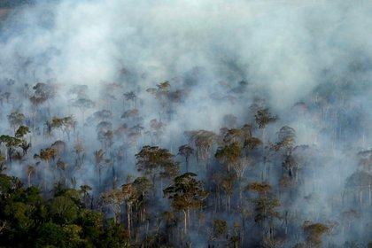 La Amazonía perdió 9.762 kilómetros cuadrados de su cobertura vegetal en un año (REUTERS/Bruno Kelly/File Photo)