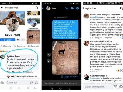 En estas capturas se puede ver cómo hay varias familias afectadas. El acusado bloqueó a todas después de adoptar a las mascotas (Foto: Facebook The Pandu)
