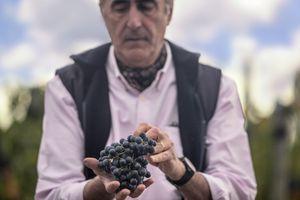 Por qué el Malbec es el mejor vino argentino