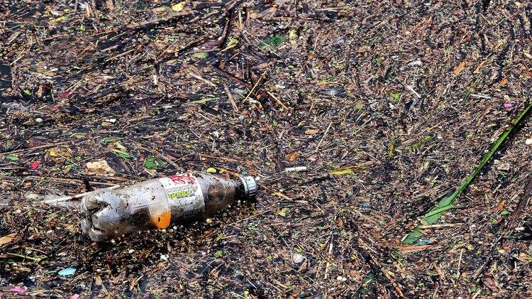 "La agricultura continúa expandiéndose, sobre todo ""a expensas del bosque tropical"" (AP)"