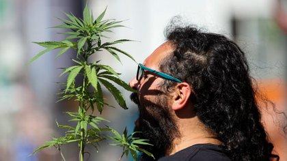 """La propuesta de Ley Federal de Regulación de Cannabis califica el tema como """"consumo adulto"""", más que """"consumo lúdico"""" o """"recreativo"""" (Foto: Galo Cañas/Cuartoscuro)"""