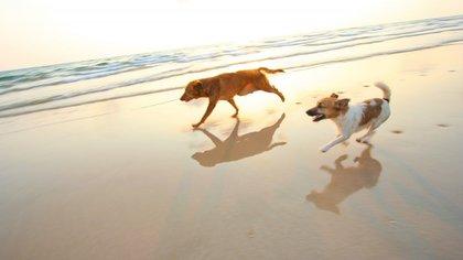 Las mascotas tendrán una razón menos para amar el verano (iStock)