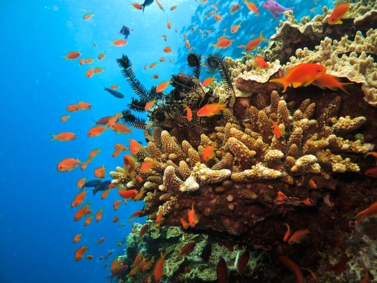 Hogar del sistema de arrecifes de coral más grande del mundo, la Gran Barrera de Coral se encuentra entre los mejores destinos de buceo en el planeta. El arrecife es más largo que la Gran Muralla China y se puede ver desde el espacio exterior