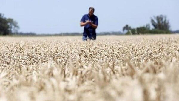 El CNA busca establecer los rasgos estructurales de las actividades agrícolas, pecuarias, forestales y bioindustriales. Solo se encargará de indagar los aspectos físicos de las explotaciones agropecuarias
