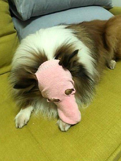 El ingenio también abarca la protección a las mascotas (Weibo)