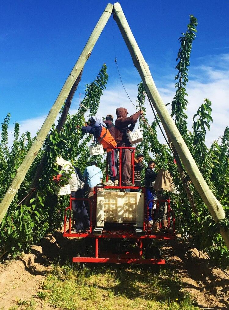 La industria frutihortícola neuquina, una de las principales actividades en Neuquén, necesitaexpandirse, según Quiroga.