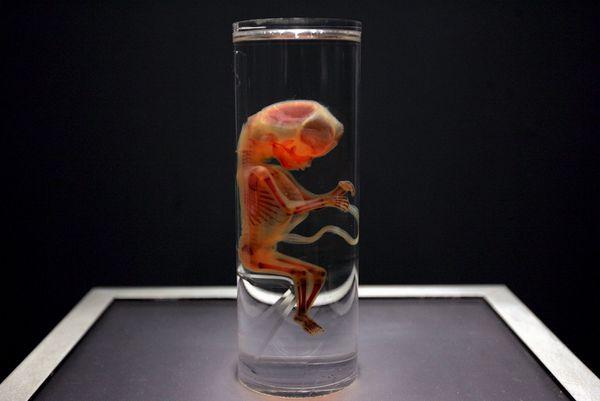 Estados Unidos realiza las primeras modificaciones a embriones humanos