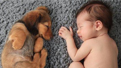 El vínculo que existe con los perros es único y tiene múltiples beneficios para la crianza del pequeño