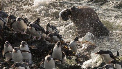 Lobos marinos y pingüinos son un paisaje natural del lugar