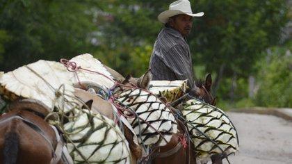 Para que una bebida pueda ser llamada mezcal, además de su preparación, debe haber sido hecha en alguno de los estados de origen de denominación, como Oaxaca, Guerrero o San Luis Potosí (Foto: Cuartoscuro)