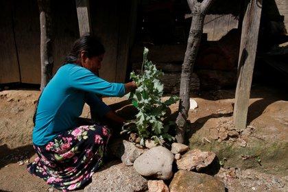 Una mujer en la zona sur del estado de Guerrero. Las autoridades deberán prever cómo llegarán las vacunas COVID-19 las zonas de conflicto (Foto: REUTERS / Carlos Jasso)