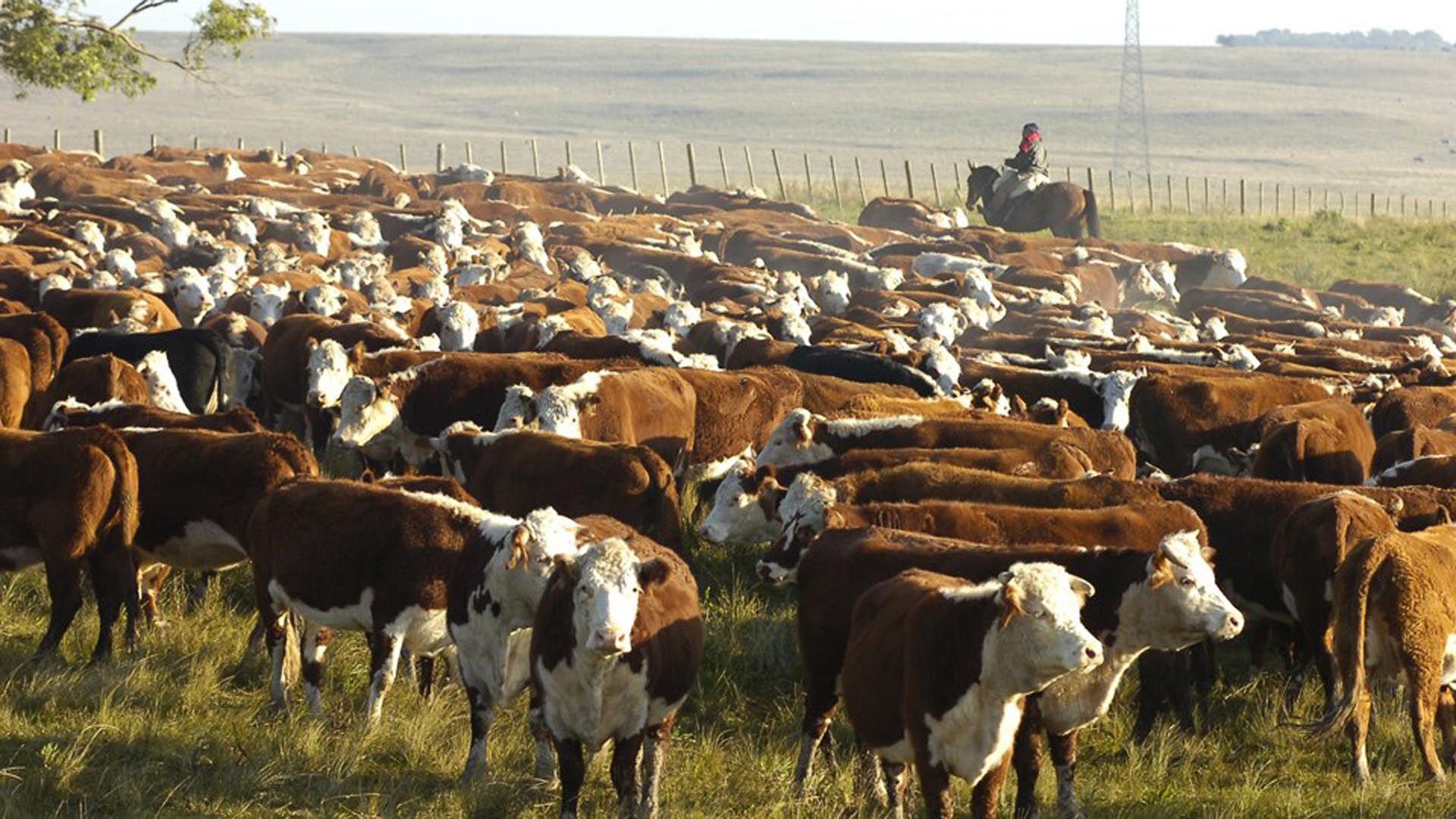Representantes de la producción ganadera también opinaron sobre la carne sintética