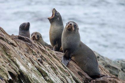 Geográficamente aisladas durante millones de años, las islas Chatham presenciaron la evolución de especies únicas de aves y plantas