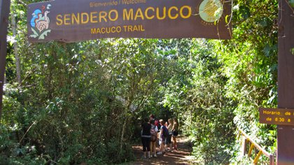 Uno de los senderos del Parque Nacional Iguazú
