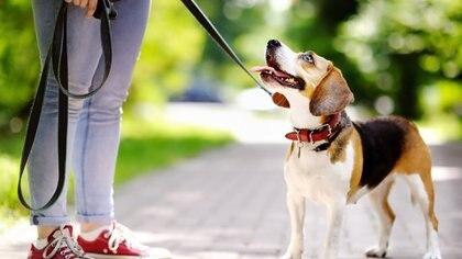Un estudio reveló que los animales tienen la capacidad de distinguir si sus dueños están felices o enojados (Getty Images)