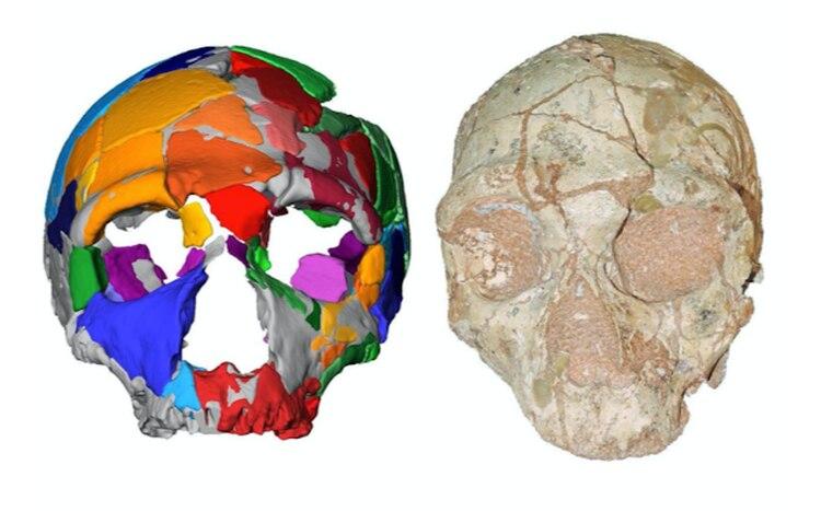 Una imagen compuesta del cráneo de aproximadamente 170,000 años de antigüedad y su reconstrucción, muestran características similares a las de los neandertales, por ejemplo en las cejas gruesas y redondeadas. Crédito: KATERINA HARVATI, EBERHARD KARLS UNIVERSITY OF TÜBINGEN