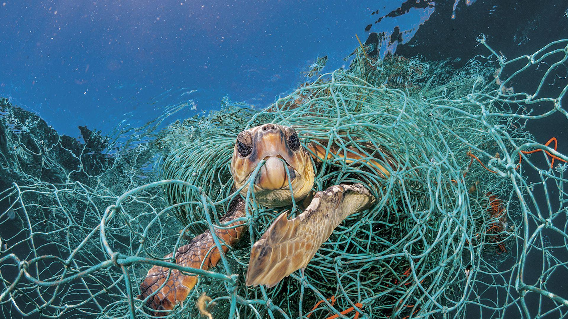 Una tortuga es atrapada por una red plástica (NatGeo)