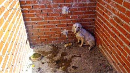 La crueldad contra los animales está penada.