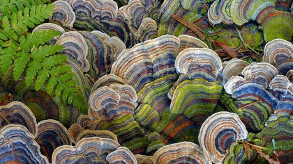 Detalle de hongos en un camino en Port Moody, Columbia Británica Lanza Isackson/ National Geographic Photo Contest 162