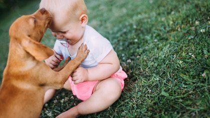 La integración entre el bebé y el perro es positiva en muchos sentidos, uno de ellos es la sociabilización (Getty Images)