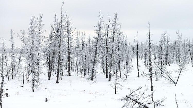 Paisajes naturales en la península rusa de Yamal (Grosby)