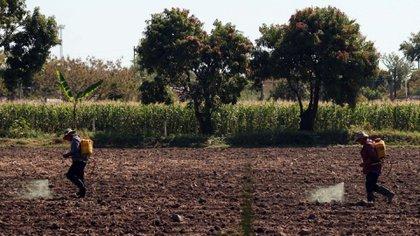 La reforma del artículo 27 constitucional propuesta por Narro busca darle personalidad jurídica a ejidos y comunidades rurales (Foto: Cuartoscuro)
