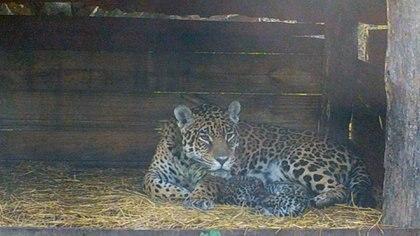 Tania y sus dos cachorros nacidos el 30 de enero por la madrugada.