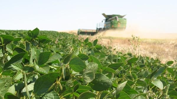 Bioceres creó una soja resistente a la sequía que es pionera a nivel global
