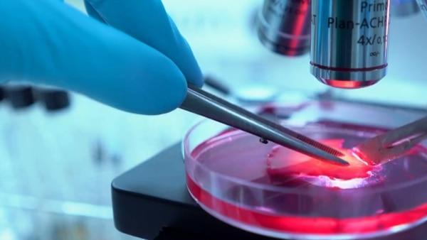 Mediante el diagnóstico precoz se pueden reducir notablemente las muertes por cáncer